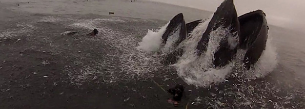 Diver almost gets eaten by a whale