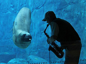 Casey the Seal enjoying a sax solo