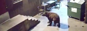 Bear takes bin from Colorado restaurant