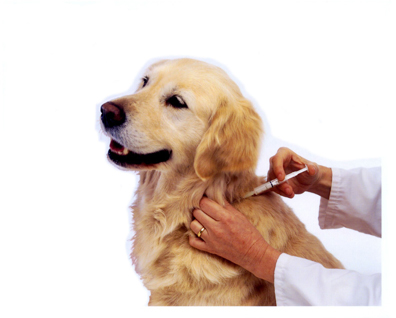 dog_vaccinated